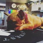 On ne réveille pas le chien qui dort 🤫 Ici même les boules de poils se sentent chez elles  #vapelifestyle #vape #vapeshop #vapelife #dog #frenchie #sleeping